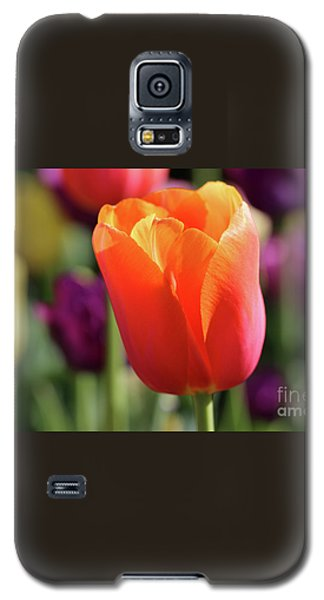 Orange Tulip In Franklin Park Galaxy S5 Case