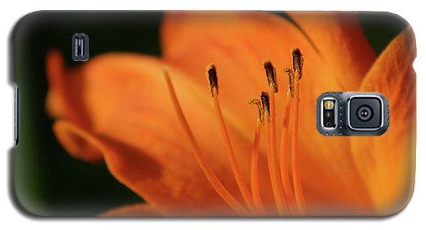 Orange Wave 3096 H_2 Galaxy S5 Case