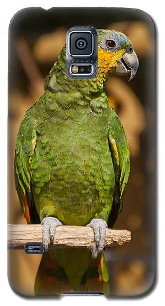 Macaw Galaxy S5 Case - Orange-winged Amazon Parrot by Adam Romanowicz