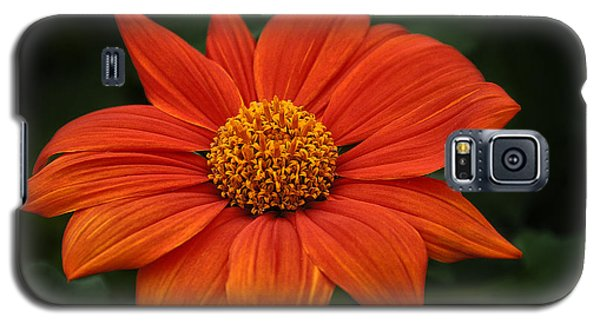 Orange You Pretty Galaxy S5 Case