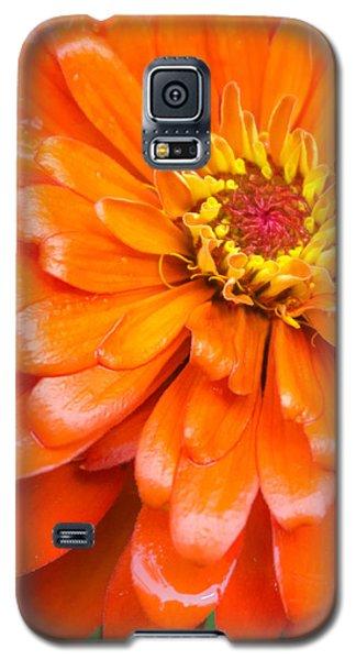 Orange Zinnia After A Rain Galaxy S5 Case by Jim Hughes