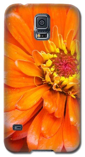 Orange Zinnia After A Rain Galaxy S5 Case