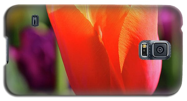 Orange Tulip Square Galaxy S5 Case