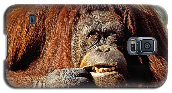Orangutan Galaxy S5 Case - Orangutan  by Garry Gay
