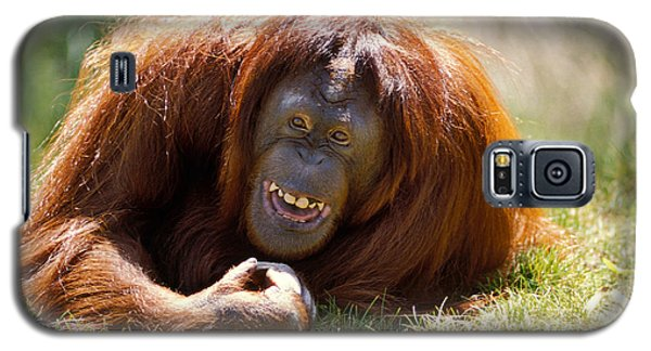 Orangutan Galaxy S5 Case - Orangutan In The Grass by Garry Gay