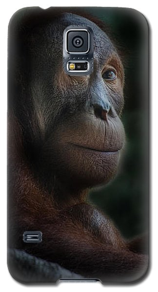 Orangutan Session Galaxy S5 Case by CR  Courson