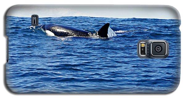 Orca Galaxy S5 Case by Marilyn Wilson