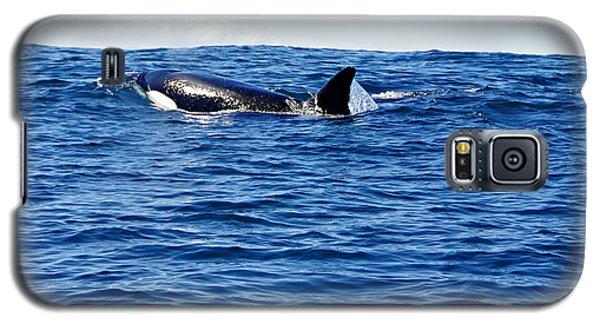 Orca Galaxy S5 Case