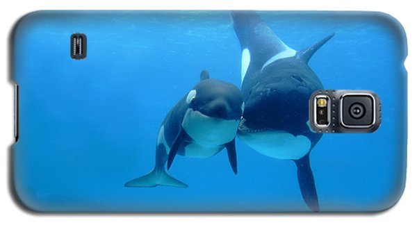 Orca Orcinus Orca Mother And Newborn Galaxy S5 Case