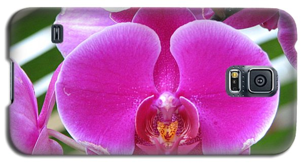 Orchid 8 Galaxy S5 Case by David Dunham