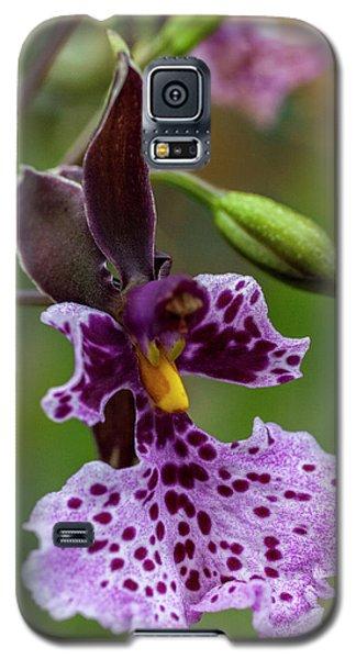 Orchid - Caucaea Rhodosticta Galaxy S5 Case