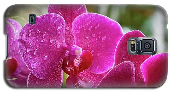 Orchid Dew Galaxy S5 Case