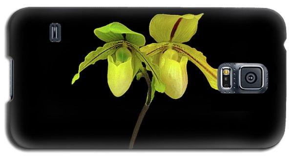 Orchid Paphiopedilum Druid Spring Galaxy S5 Case