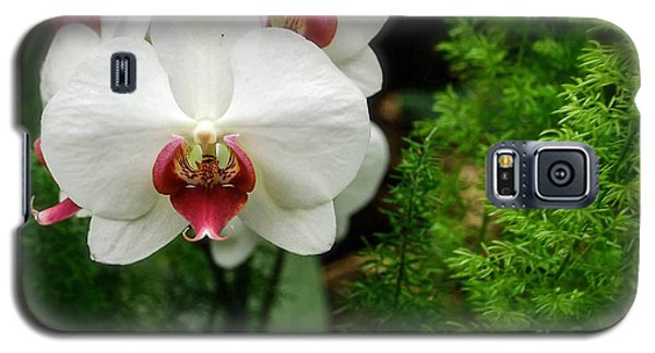 Galaxy S5 Case featuring the photograph Orchid White by Brian Jones