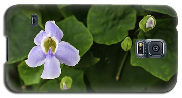 Galaxy S5 Case featuring the photograph Orchids  by Jingjits Photography