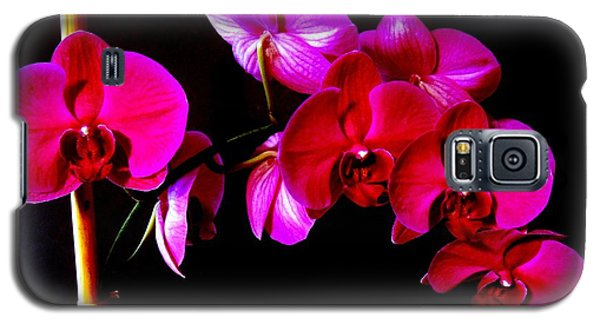 Orchids Galaxy S5 Case by Ron Davidson