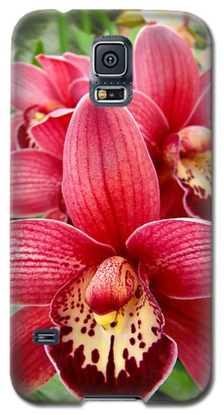 Orchids Up Close Galaxy S5 Case by Sue Melvin