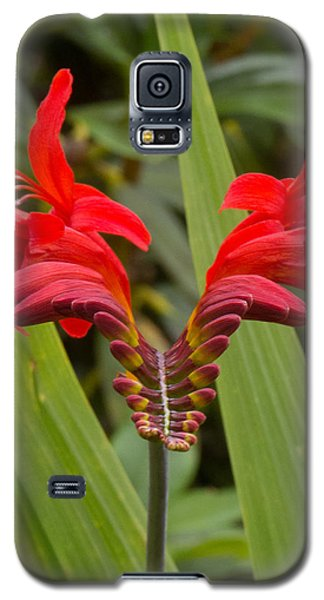 Oregon Flower 1 Galaxy S5 Case