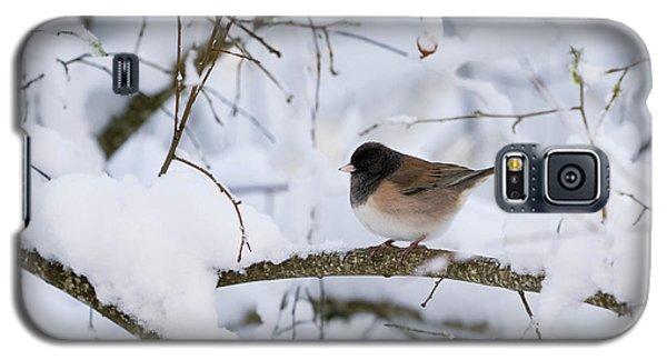 Oregon Junko In Snow Galaxy S5 Case
