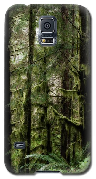 Oregon Old Growth Coastal Forest Galaxy S5 Case