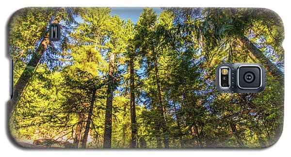 Galaxy S5 Case featuring the photograph Oregon Trees by Jonny D
