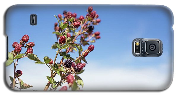 Organic Handpicked Home Orchard Raspberries,blackberries From Bu Galaxy S5 Case