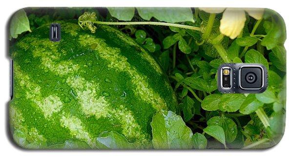 Organic Watermelon Galaxy S5 Case