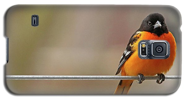 Oriole On The Line Galaxy S5 Case