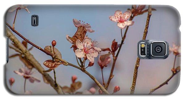 Purple Leaf Sandcherry Blossoms Galaxy S5 Case