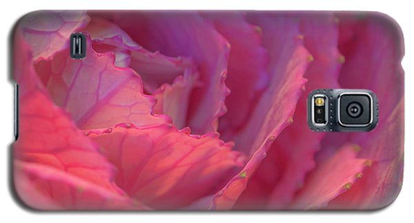Galaxy S5 Case featuring the photograph Ornamental Pink by Roy McPeak