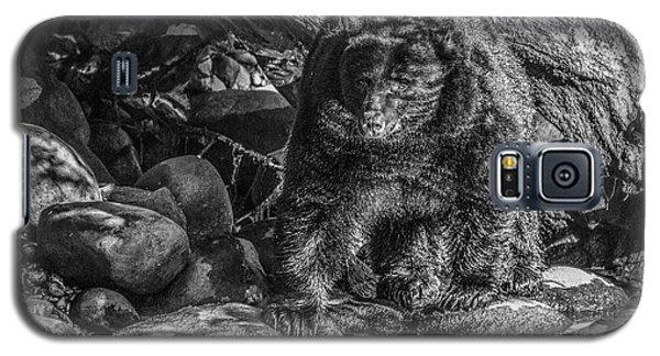 Oservant Black Bear  Galaxy S5 Case