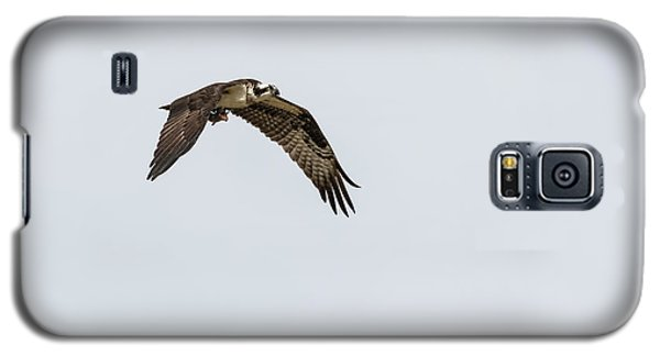 Galaxy S5 Case featuring the photograph Osprey 2017-2 by Thomas Young