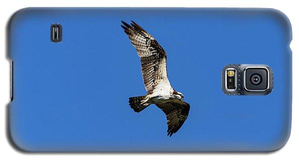 Osprey 5 Galaxy S5 Case