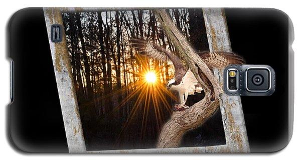 Osprey At Sunset  Black Galaxy S5 Case
