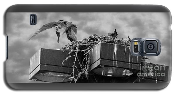 Osprey Carrying Fish To Nest Galaxy S5 Case