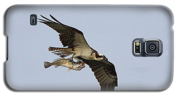 Galaxy S5 Case featuring the photograph Osprey Catches A Fish by Barbara Bowen