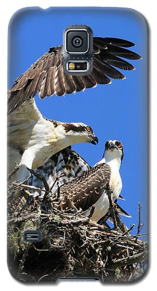 Galaxy S5 Case featuring the photograph Osprey Chicks Ready To Fledge by Debbie Stahre