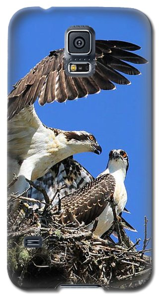 Osprey Chicks Ready To Fledge Galaxy S5 Case by Debbie Stahre