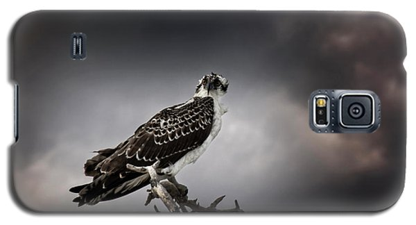 Galaxy S5 Case featuring the photograph Osprey by Chrystal Mimbs
