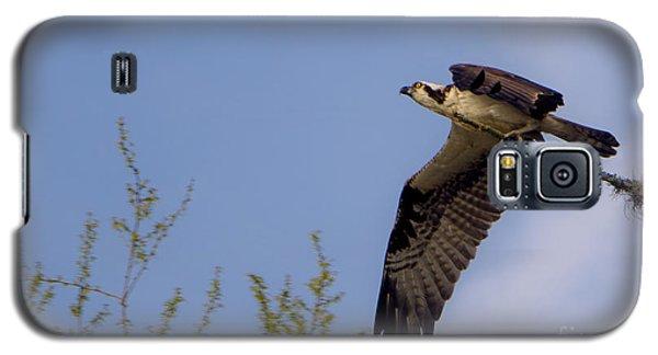 Osprey Collecting Sticks Galaxy S5 Case
