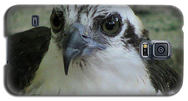 Osprey Portrait Galaxy S5 Case