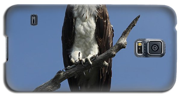 Galaxy S5 Case featuring the photograph Osprey Eyeing The Gulf by Barbara Bowen