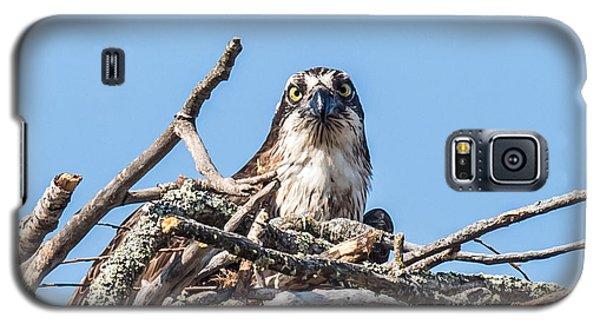 Osprey Eyes Galaxy S5 Case by Paul Freidlund