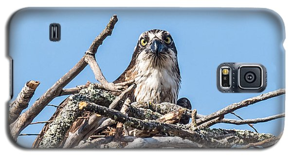 Osprey Eyes Galaxy S5 Case