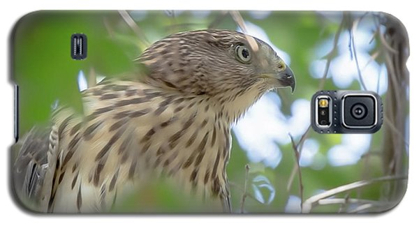 Red-shouldered Hawk Fledgling 1 Galaxy S5 Case