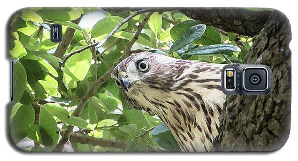 Red-shouldered Hawk Fledgling - 5 Galaxy S5 Case