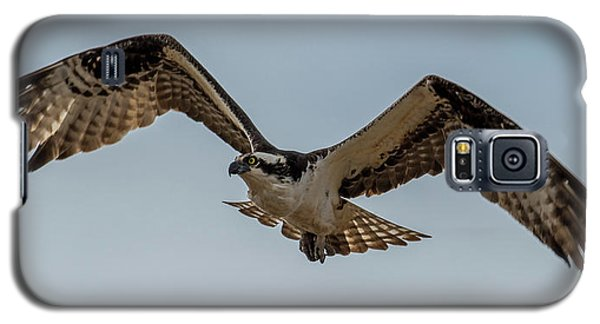 Osprey Flying Galaxy S5 Case