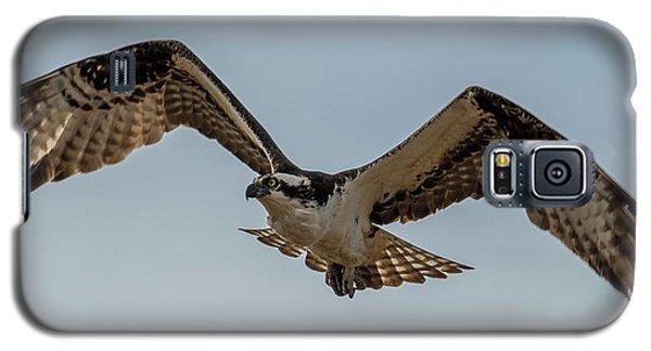 Osprey Flying Galaxy S5 Case by Paul Freidlund