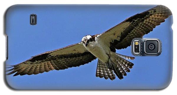 Osprey Glide Galaxy S5 Case
