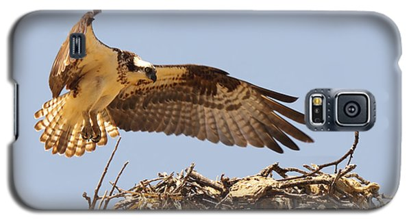 Galaxy S5 Case featuring the photograph Osprey Hovering Above Nest by Max Allen